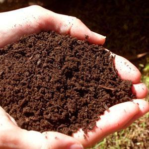 toprak-1 İlk insan topraktan mı yaratılmış, maymundan mı gelmiştir?