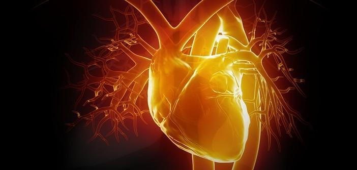 Kalp Nedir ?