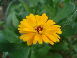 Çiçekler, Allah'ın sanatını takdir edip alkışlıyorlar