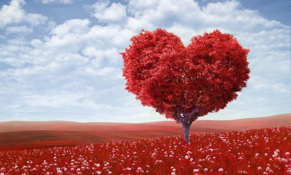 Sadr-Kalb-Akıl İlişkileri