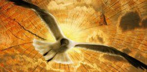 600_294_d4696230-300x147 Allah'ın Hikmetine Boyun Eğmeli
