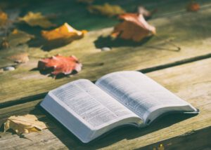kitap-300x214 Kitap Okumak Gerek Hem de Çok!