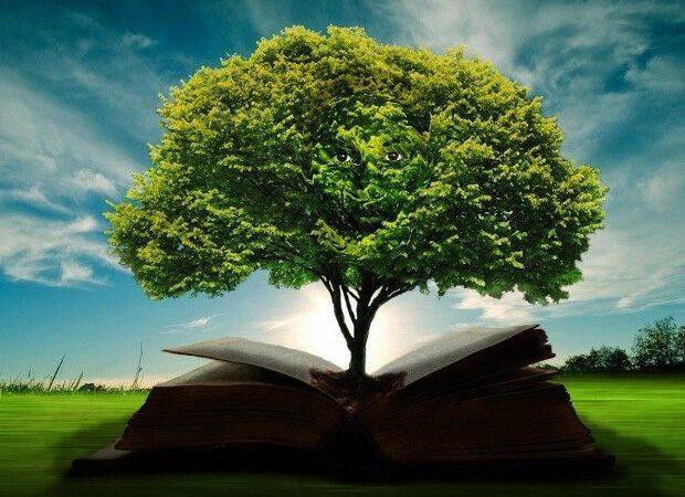 Bilgi ve Zihinsel Altyapısı
